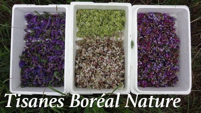 melange-boreal-nature